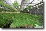 Florida Land 40 Acres Zellwood Foliage Nursery