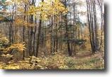 Michigan Hunting Land 10 Acres Lot 158 Light Blue Rd, MLS# 1098364