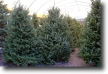 Florida Land 25 Acres Ergle Christmas Tree Farm
