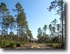 Florida Land 1 Acres Hiers Recreation and Timber Tract