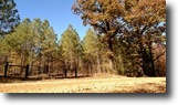158 Acres of Hunting Land-Oktibbeha Co.