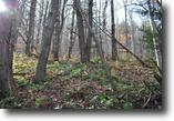 42 acres near Binghamton NY with Financing