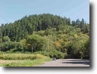 Owner Finance - Parcel Bordering Redwoods!