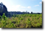 Florida Land 296 Acres Johnstown Timber Tracts