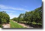 Florida Land 171 Acres North Collier Grove