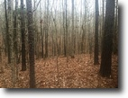 Mississippi Hunting Land 10 Acres Land For Sale-Neely Rd, Maben, MS