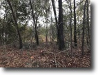 5.10 acre wood tract in Richmond Hill!