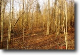 Mississippi Hunting Land 14 Acres Land For Sale-Hwy 397 Louisville, MS