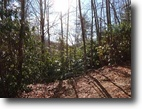19+ Acres ~ Wooded ~ Near New River Trail