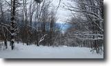 64 acres Timberland near Whitney Point NY