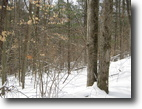18 acres near Ithaca NY and State Forest
