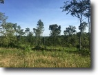 Kentucky Ranch Land 52 Acres Spring, Creek, Branch, Wooded, Wildlife