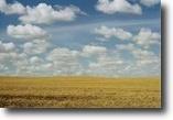 Saskatchewan Farm Land 160 Acres Organic Saskatchewan Hay and Grainland