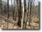 106 acres Hunting Land Birdsall NY Forest