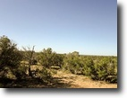 """Just Reduced!!! 2.5 Acres """"Off the Grid"""""""