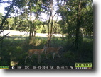 Texas Land 4 Acres Land - For Sale By Owner - Glen Rose, TX