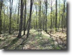 Michigan Hunting Land 218 Acres TBD Schultz Rd., MLS# 1100302