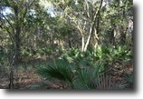 Florida Land 25 Acres Two Mile Prairie