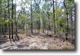 Florida Land 40 Acres Annutteliga Hammock Homesites