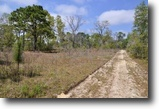 Florida Land 111 Acres Annutteliga Hammock Tract 2