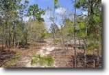 Florida Land 16 Acres Annutteliga Hammock Tract 4