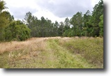 Florida Land 248 Acres Green Swamp Preserve 6