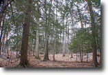 8 acres Mature Forest near Dansville NY