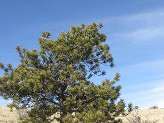 Large Tree on Site