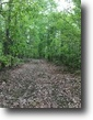 23 Wooded Acres In Adair County, KY
