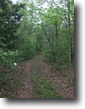 21 Wooded Acres In Adair County, KY