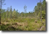 Florida Land 404 Acres Deen Still Road Recreational Tract