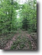 44 Acre Wooded Tract In Adair County, KY