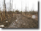 117 acres in Constable NY Hunting Land