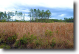 Florida Land 7 Acres Woods of Ormond Beach