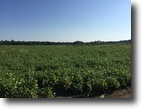 Mississippi Hunting Land 346 Acres Land For Sale - Old Mayhew Rd. Artesia, MS