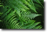 Florida Land 40 Acres Premium Fern and Foliage Operation