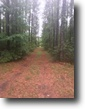Florida Hunting Land 83 Acres For sale 83 ac of hunting land with pond.