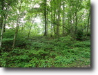 8.40 Acres Wooded in Clay Co.