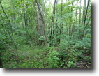 7.70 Acres Wooded in Clay County