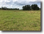 Florida Land 50 Acres Wauchula Pasture