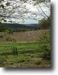 100 acres Farmland near Norwich NY