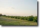 Florida Land 170 Acres Hogan Grove
