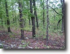 60 acres, Artesian spring, mountain top