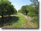 Florida Land 16 Acres Sunrock Grove