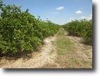Florida Land 660 Acres Demeter Grove