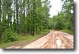 Florida Land 292 Acres Pinehatchee East Hunting Tract