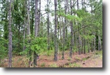 Florida Land 263 Acres Pinehatchee North Hunting Tract