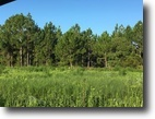 FL Property by St.John's River 18 Acre