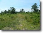Wisconsin Hunting Land 40 Acres Town of Minong, WI