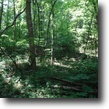 35 Unrestricted, Undeveloped, Wooded acres